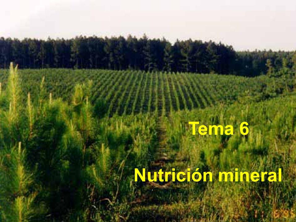C, H, O (90-95%) Fracción mineral (5-10%) MACRO y MICRONUTRIENTES Macronutrientes Micronutrientes Macronutrientes N P S Ca K Mg Micronutrientes Fe Cl Mn B Zn Cu Mo
