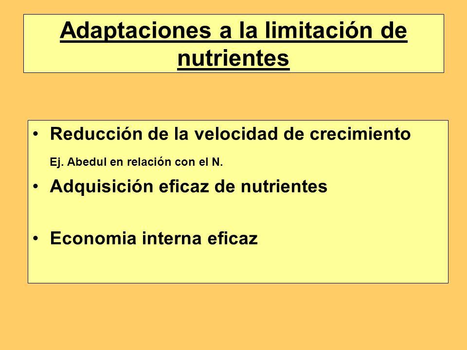 Adaptaciones a la limitación de nutrientes Reducción de la velocidad de crecimiento Ej. Abedul en relación con el N. Adquisición eficaz de nutrientes