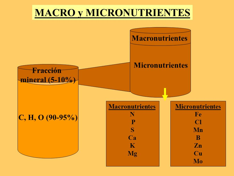 C, H, O (90-95%) Fracción mineral (5-10%) MACRO y MICRONUTRIENTES Macronutrientes Micronutrientes Macronutrientes N P S Ca K Mg Micronutrientes Fe Cl