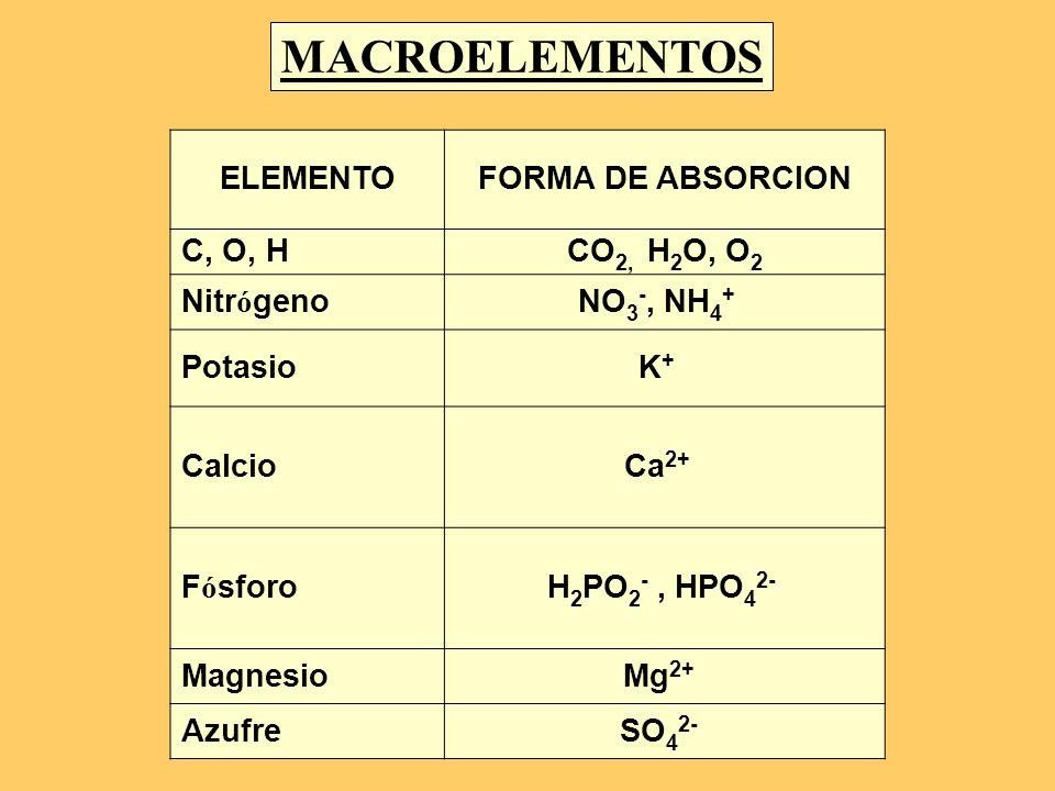 ELEMENTOFORMA DE ABSORCION C, O, HCO 2, H 2 O, O 2 Nitr ó genoNO 3 -, NH 4 + PotasioK + CalcioCa 2+ F ó sforoH 2 PO 2 -, HPO 4 2- MagnesioMg 2+ Azufre
