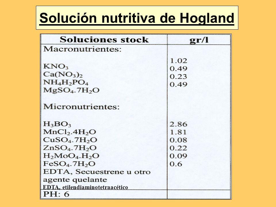 Solución nutritiva de Hogland EDTA, etilendiaminotetraacético