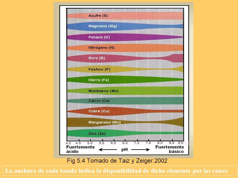 La anchura de cada banda indica la disponibilidad de dicho elemento por las raíces Fig 5.4 Tomado de Taiz y Zeiger.2002