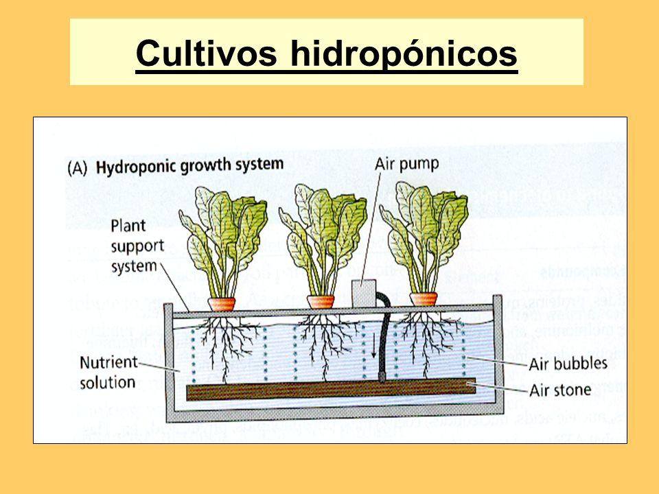 Relación entre la concentración de un elemento en la planta y el crecimiento