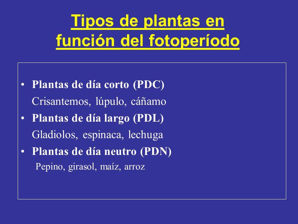 (Tomado de Taiz y Zeiger 2002) Floración en función del fotoperíodo