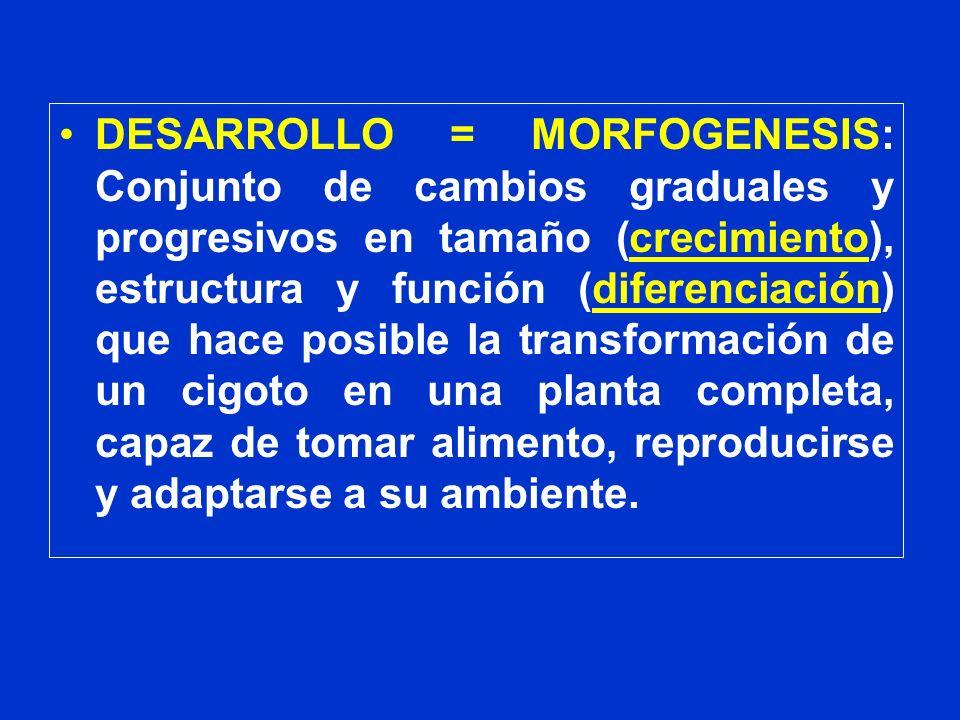 DESARROLLO = MORFOGENESIS: Conjunto de cambios graduales y progresivos en tamaño (crecimiento), estructura y función (diferenciación) que hace posible
