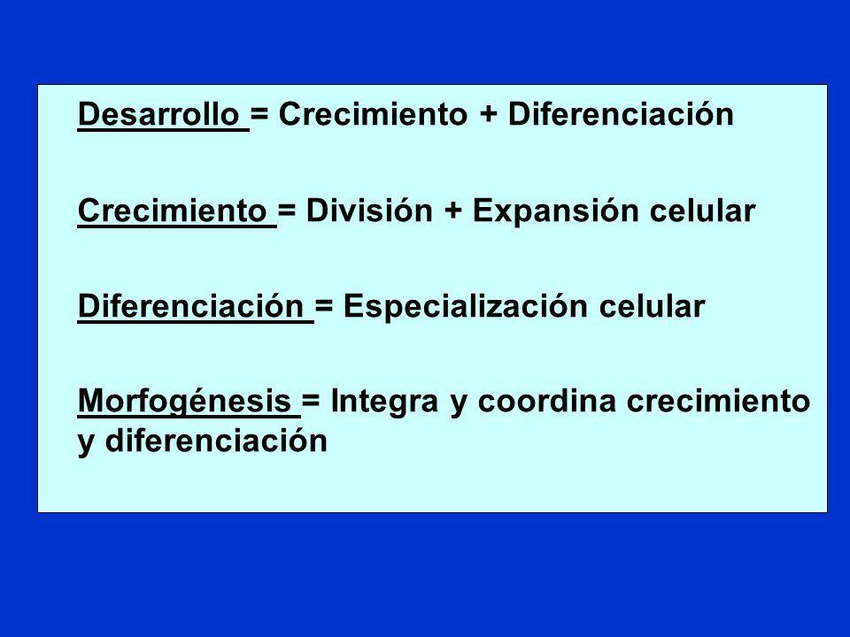 Desarrollo = Crecimiento + Diferenciación Crecimiento = División + Expansión celular Diferenciación = Especialización celular Morfogénesis = Integra y