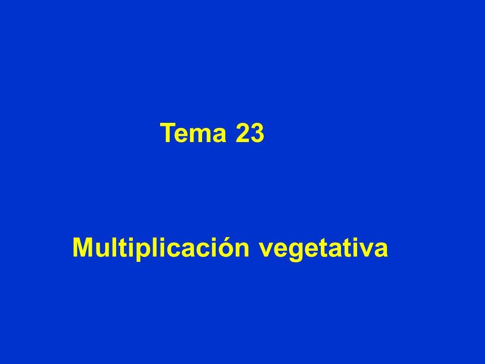 Tema 23 Multiplicación vegetativa