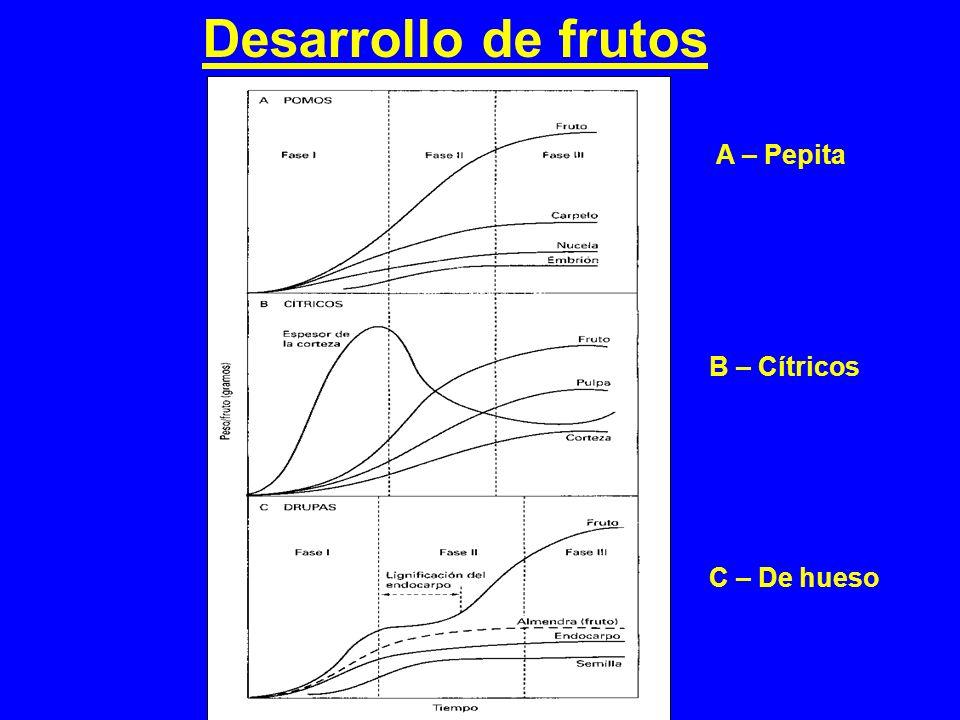 Desarrollo de frutos A – Pepita B – Cítricos C – De hueso
