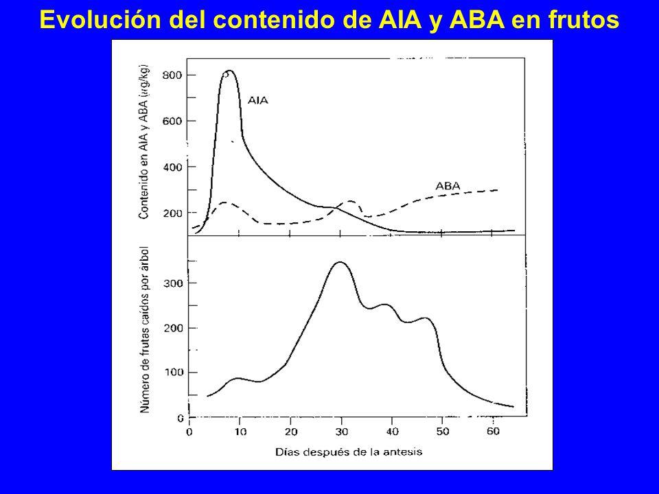 Evolución del contenido de AIA y ABA en frutos