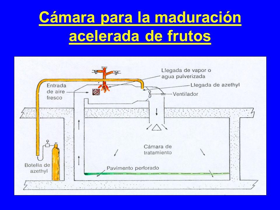 Cámara para la maduración acelerada de frutos