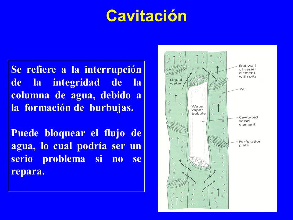 Cavitación Se refiere a la interrupción de la integridad de la columna de agua, debido a la formación de burbujas. Puede bloquear el flujo de agua, lo