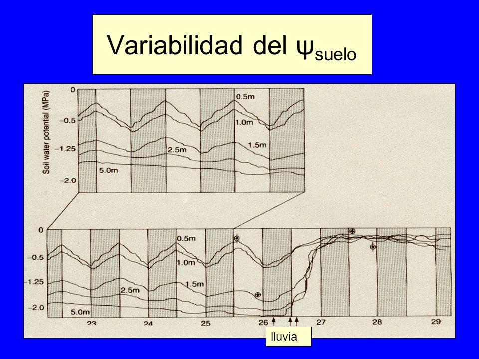 Variabilidad del ψ suelo lluvia