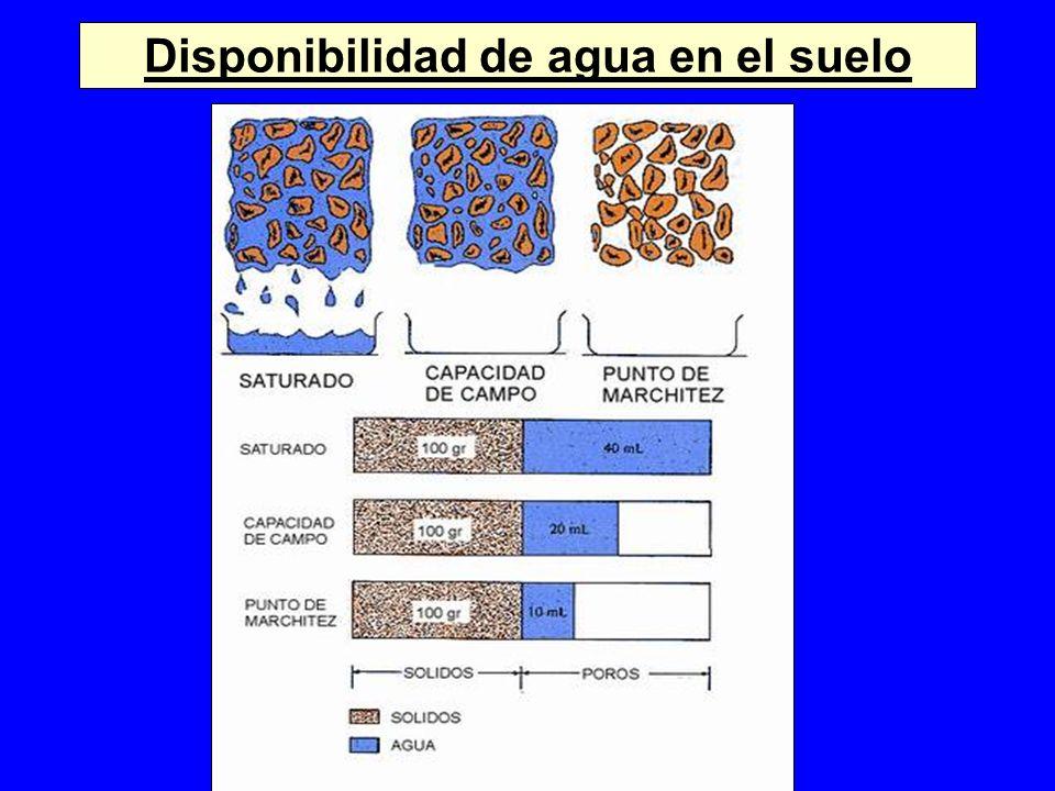 Disponibilidad de agua en el suelo