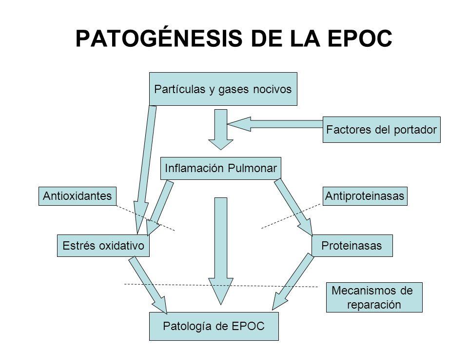 PATOGÉNESIS DE LA EPOC Partículas y gases nocivos Factores del portador Inflamación Pulmonar Antioxidantes Antiproteinasas Estrés oxidativoProteinasas