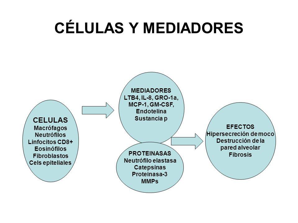 CÉLULAS Y MEDIADORES CELULAS Macrófagos Neutrófilos Linfocitos CD8+ Eosinófilos Fibroblastos Cels epiteliales MEDIADORES LTB4, IL-8, GRO-1a, MCP-1, GM