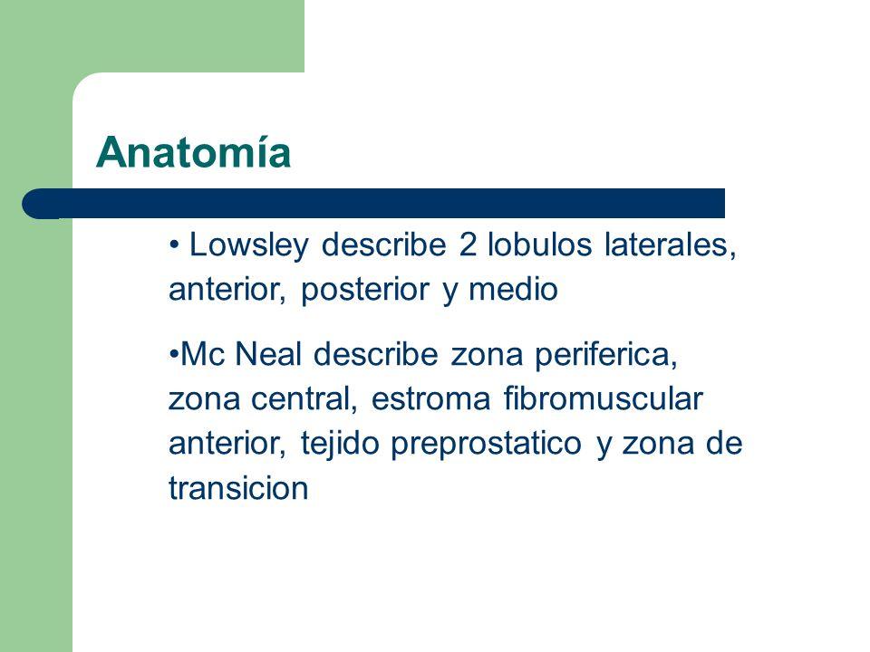 Anatomía Zona periférica subdivisión más grande de la próstata contiene 75% del tejido glandular sitio de los carcinomas Estroma fibromuscular anterior compromete más de un tercio del peso prostatico