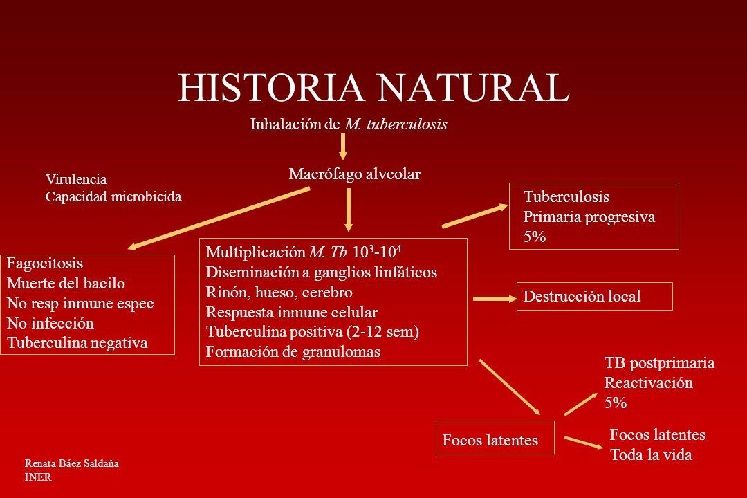 HISTORIA NATURAL Macrófago alveolar Inhalación de M. tuberculosis Virulencia Capacidad microbicida Fagocitosis Muerte del bacilo No resp inmune espec