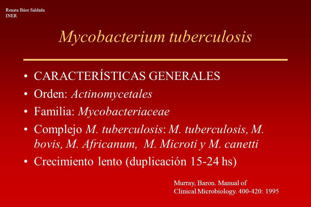 Mycobacterium tuberculosis CARACTERÍSTICAS GENERALES Orden: Actinomycetales Familia: Mycobacteriaceae Complejo M. tuberculosis: M. tuberculosis, M. bo
