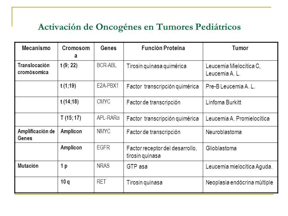 Activación de Oncogénes en Tumores Pediátricos MecanismoCromosom a GenesFunción ProteinaTumor Translocación cromósomica t (9; 22) BCR-ABL Tirosin quin