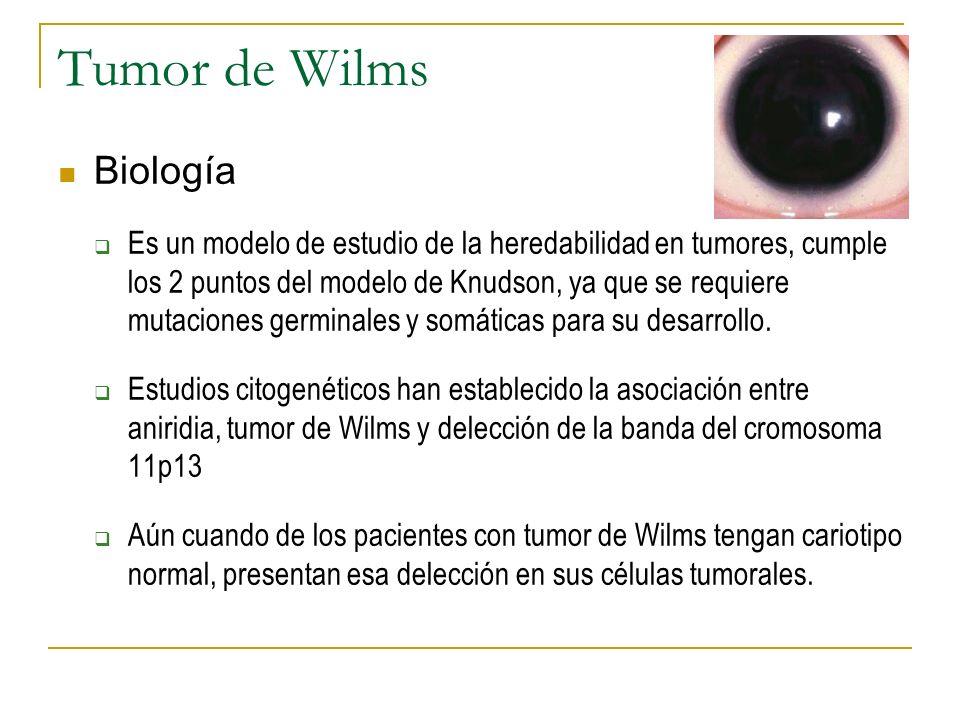 Tumor de Wilms Biología Es un modelo de estudio de la heredabilidad en tumores, cumple los 2 puntos del modelo de Knudson, ya que se requiere mutacion