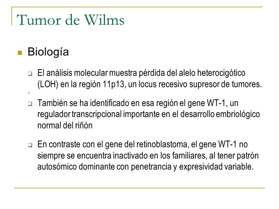 Tumor de Wilms Biología El análisis molecular muestra pérdida del alelo heterocigótico (LOH) en la región 11p13, un locus recesivo supresor de tumores