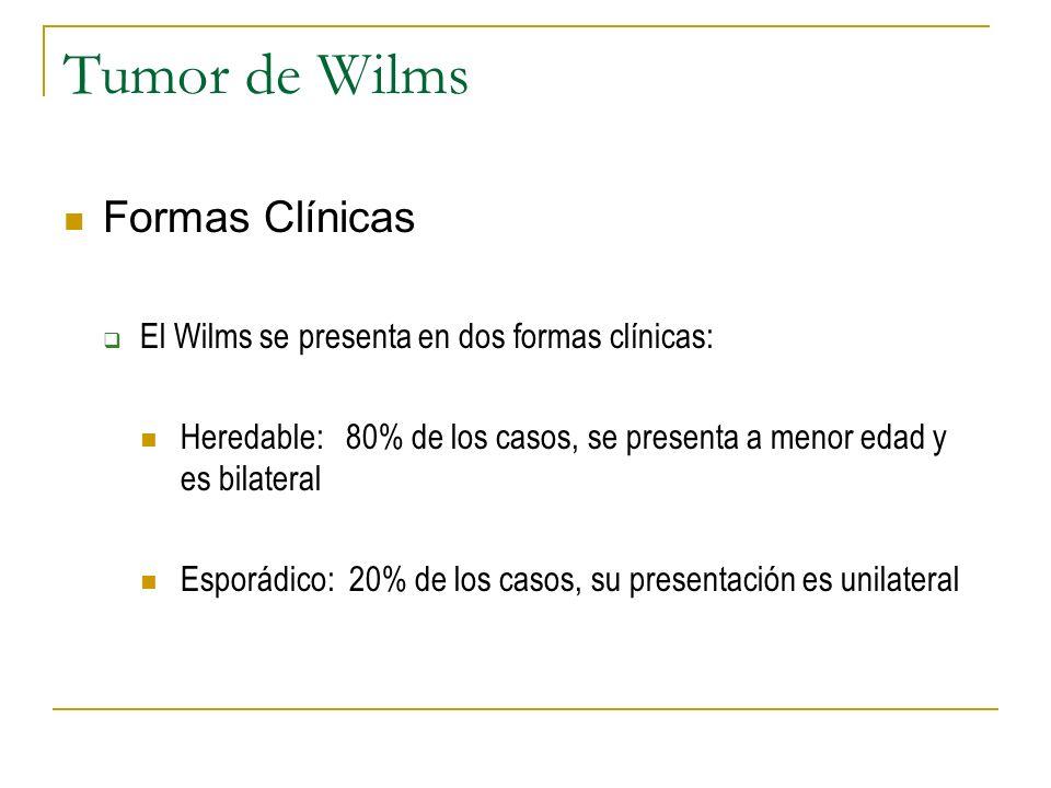 Tumor de Wilms Formas Clínicas El Wilms se presenta en dos formas clínicas: Heredable: 80% de los casos, se presenta a menor edad y es bilateral Espor