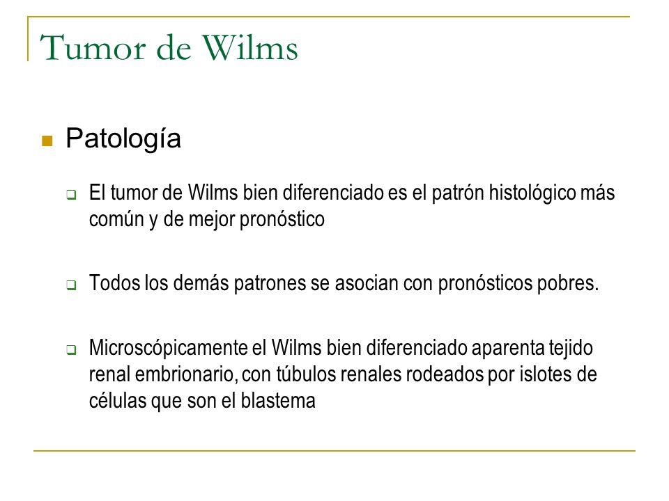 Tumor de Wilms Patología El tumor de Wilms bien diferenciado es el patrón histológico más común y de mejor pronóstico Todos los demás patrones se asoc