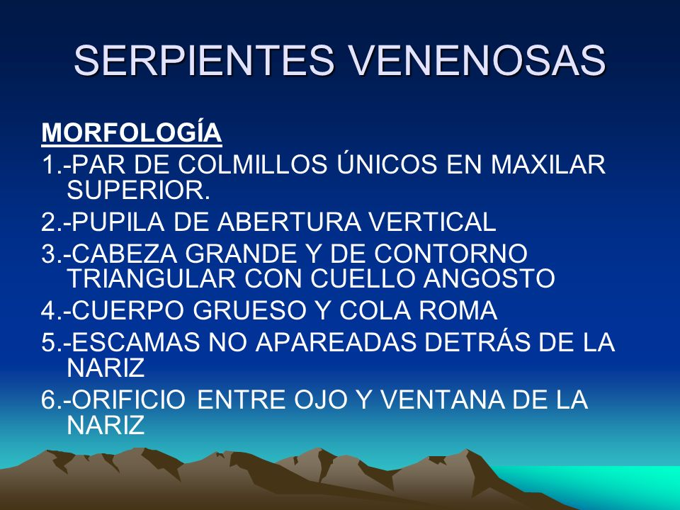 SERPIENTES VENENOSAS MORFOLOGÍA 1.-PAR DE COLMILLOS ÚNICOS EN MAXILAR SUPERIOR. 2.-PUPILA DE ABERTURA VERTICAL 3.-CABEZA GRANDE Y DE CONTORNO TRIANGUL