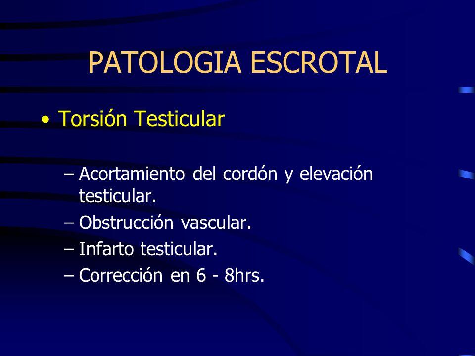 PATOLOGIA ESCROTAL Torsión Testicular –Acortamiento del cordón y elevación testicular. –Obstrucción vascular. –Infarto testicular. –Corrección en 6 -