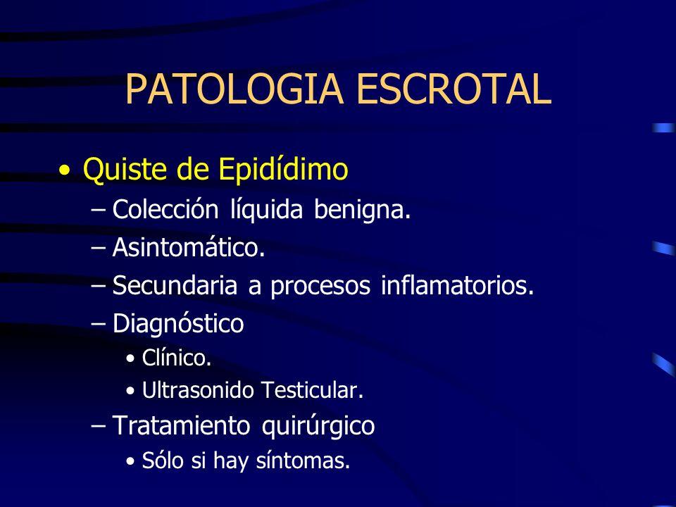 PATOLOGIA ESCROTAL Quiste de Epidídimo –Colección líquida benigna. –Asintomático. –Secundaria a procesos inflamatorios. –Diagnóstico Clínico. Ultrason