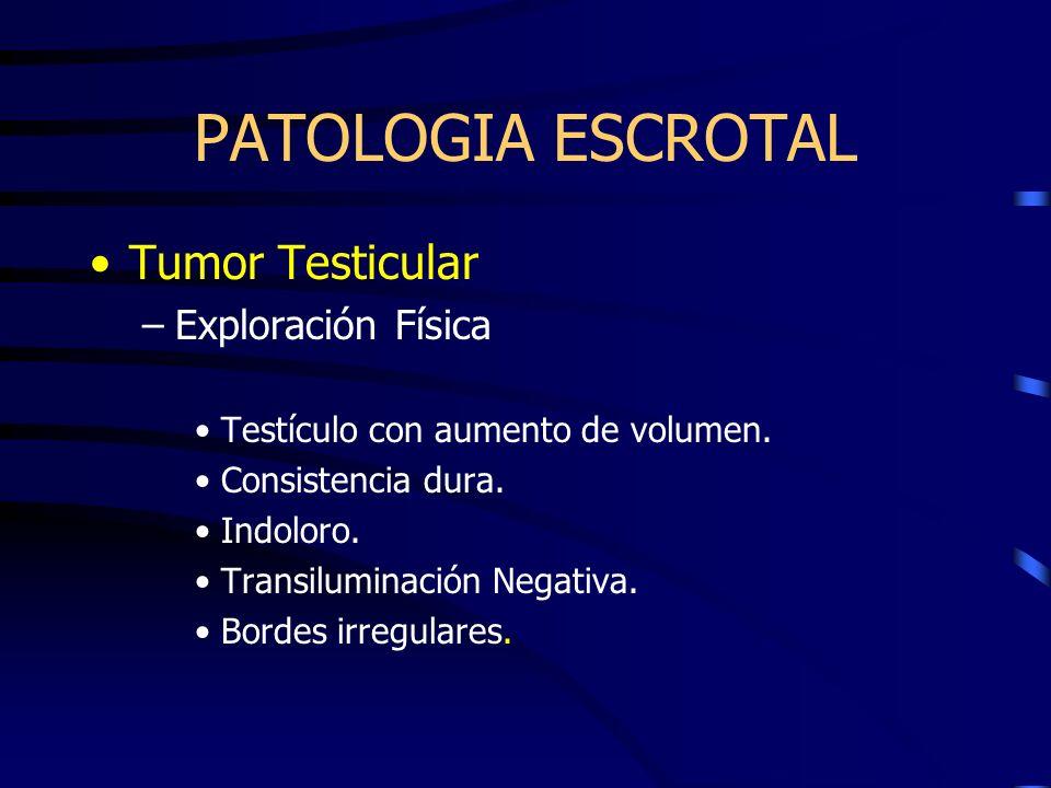 PATOLOGIA ESCROTAL Tumor Testicular –Exploración Física Testículo con aumento de volumen. Consistencia dura. Indoloro. Transiluminación Negativa. Bord