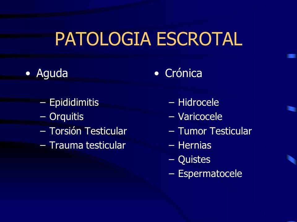 PATOLOGIA ESCROTAL Aguda –Epididimitis –Orquitis –Torsión Testicular –Trauma testicular Crónica –Hidrocele –Varicocele –Tumor Testicular –Hernias –Qui
