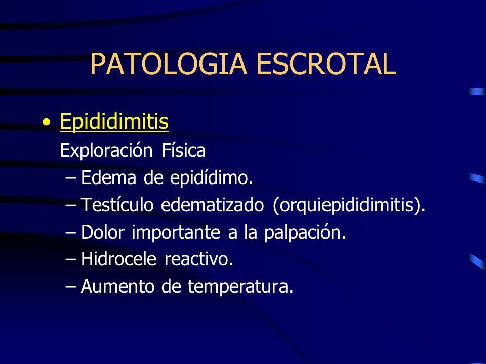 PATOLOGIA ESCROTAL Epididimitis Exploración Física –Edema de epidídimo. –Testículo edematizado (orquiepididimitis). –Dolor importante a la palpación.
