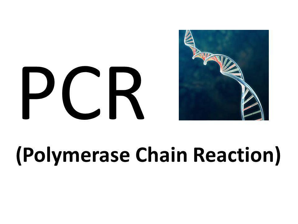 La duplicación del DNA durante la mitosis requiere la intervención de una compleja maquinaria molecular.