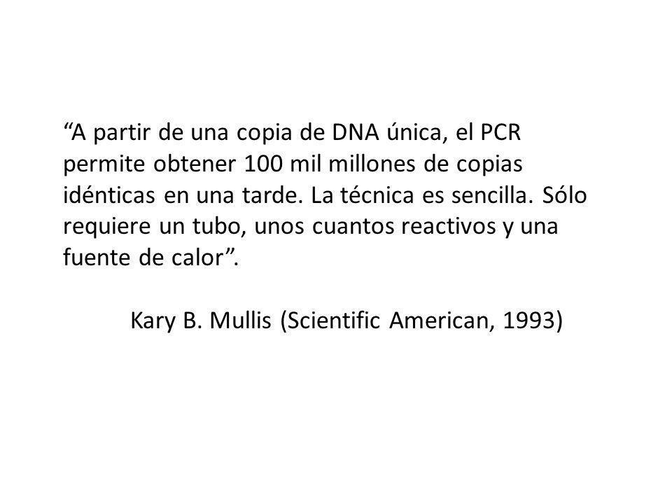 A partir de una copia de DNA única, el PCR permite obtener 100 mil millones de copias idénticas en una tarde.