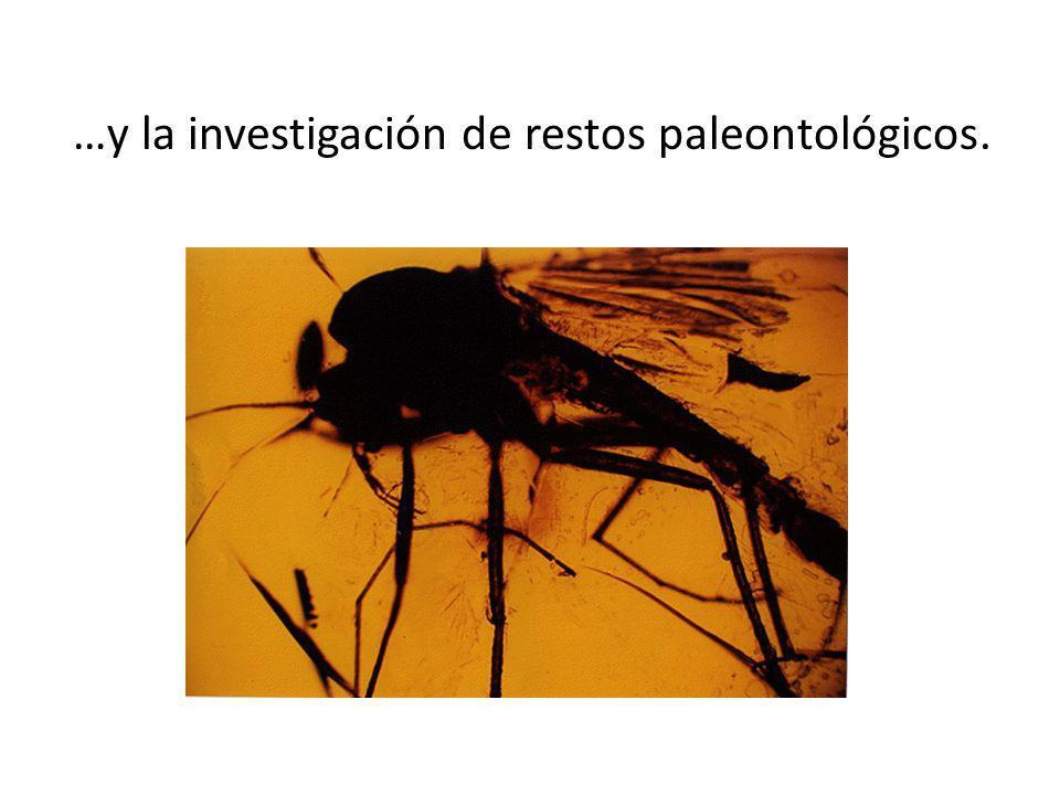 …y la investigación de restos paleontológicos.