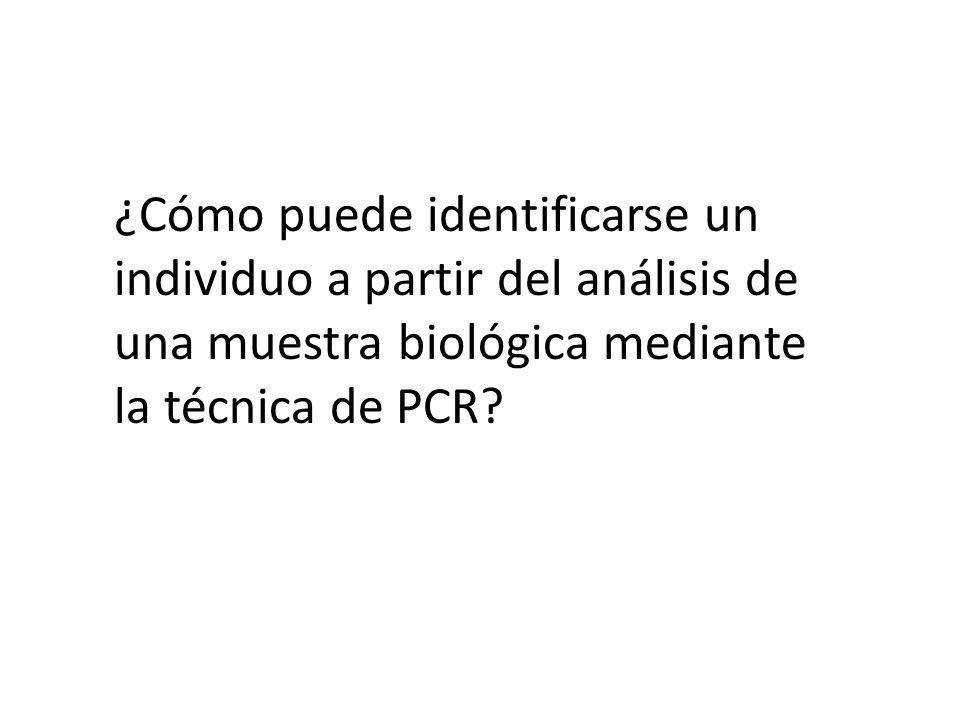 ¿Cómo puede identificarse un individuo a partir del análisis de una muestra biológica mediante la técnica de PCR?