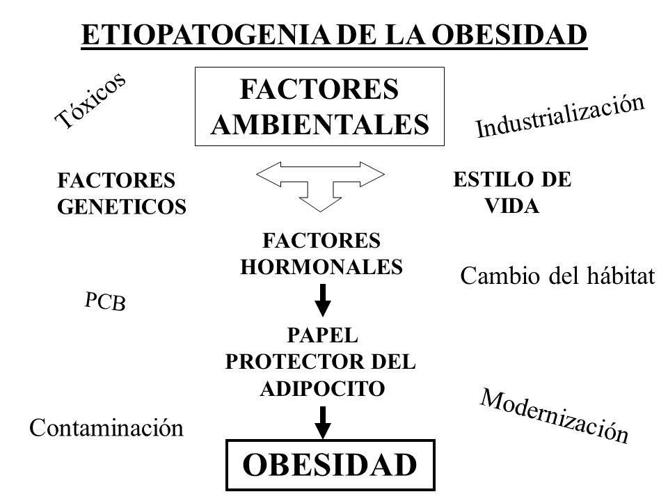 ETIOPATOGENIA DE LA OBESIDAD OBESIDAD FACTORES GENETICOS ESTILO DE VIDA FACTORES HORMONALES PAPEL PROTECTOR DEL ADIPOCITO FACTORES AMBIENTALES Tóxicos