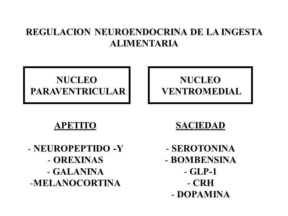 REGULACION NEUROENDOCRINA DE LA INGESTA ALIMENTARIA NUCLEO PARAVENTRICULAR NUCLEO VENTROMEDIAL APETITO - NEUROPEPTIDO -Y - OREXINAS - GALANINA -MELANO