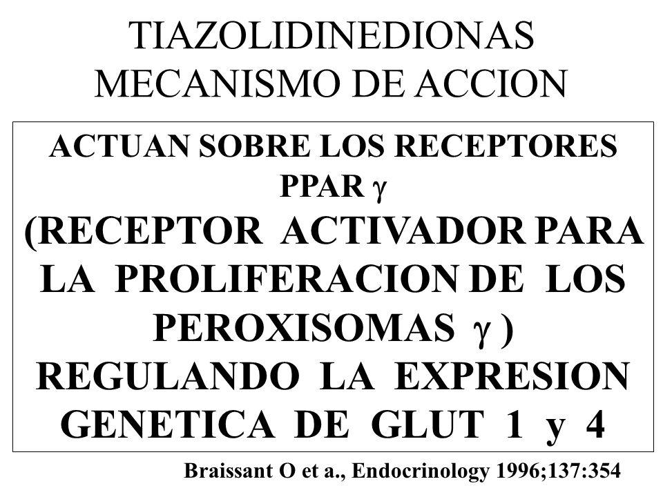 TIAZOLIDINEDIONAS MECANISMO DE ACCION ACTUAN SOBRE LOS RECEPTORES PPAR (RECEPTOR ACTIVADOR PARA LA PROLIFERACION DE LOS PEROXISOMAS ) REGULANDO LA EXP