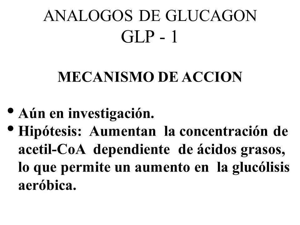 ANALOGOS DE GLUCAGON GLP - 1 MECANISMO DE ACCION Aún en investigación. Hipótesis: Aumentan la concentración de acetil-CoA dependiente de ácidos grasos