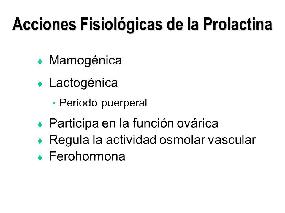 Acciones Fisiológicas de la Prolactina Mamogénica Lactogénica Período puerperal Participa en la función ovárica Regula la actividad osmolar vascular F