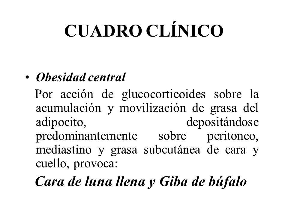 CUADRO CLÍNICO Obesidad central Por acción de glucocorticoides sobre la acumulación y movilización de grasa del adipocito, depositándose predominantem
