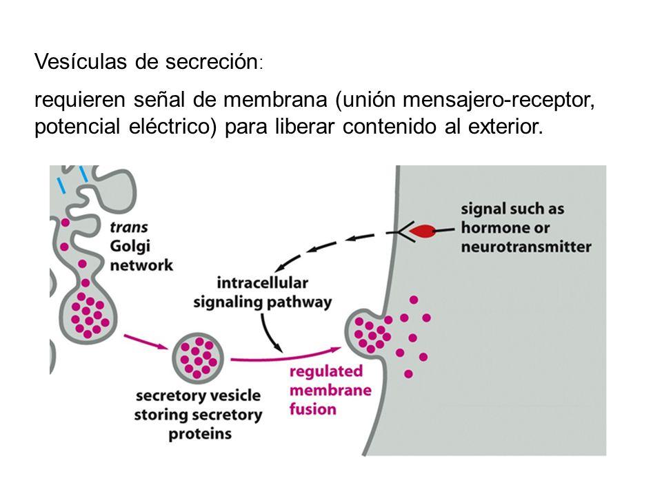 Vesículas de secreción : requieren señal de membrana (unión mensajero-receptor, potencial eléctrico) para liberar contenido al exterior.