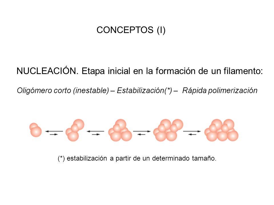 CONCEPTOS (I) NUCLEACIÓN. Etapa inicial en la formación de un filamento: Oligómero corto (inestable) – Estabilización(*) – Rápida polimerización (*) e