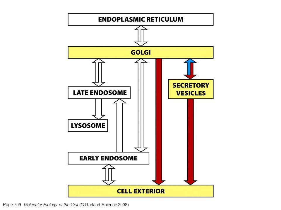 Figure 13-69 Molecular Biology of the Cell (© Garland Science 2008) … o localizado.