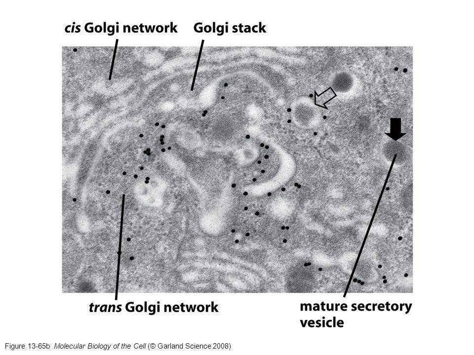 Figure 12-56 Molecular Biology of the Cell (© Garland Science 2008) Anclaje glicosilfosfatidilinositol (GPI)