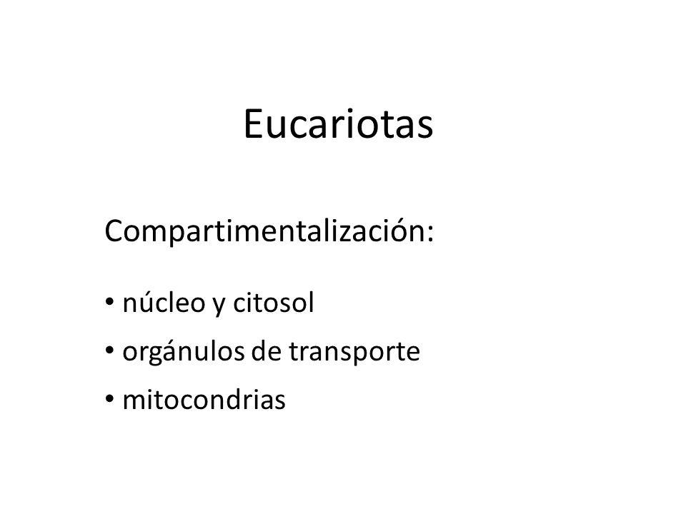 Eucariotas núcleo y citosol orgánulos de transporte mitocondrias Compartimentalización: