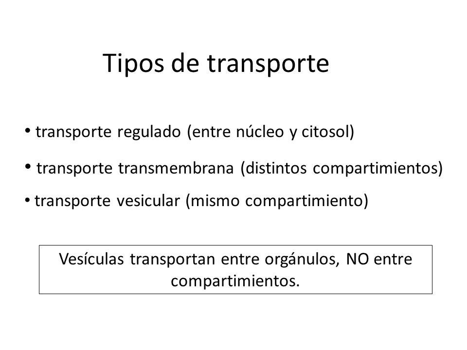 Tipos de transporte transporte regulado (entre núcleo y citosol) transporte transmembrana (distintos compartimientos) transporte vesicular (mismo comp
