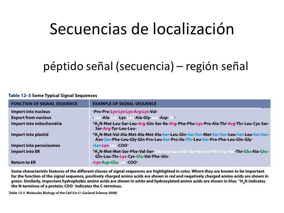 Secuencias de localización péptido señal (secuencia) – región señal